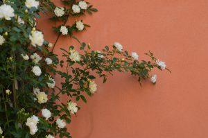 giardino-fiori-palazzo-morosini-venezia-dettaglio-natura
